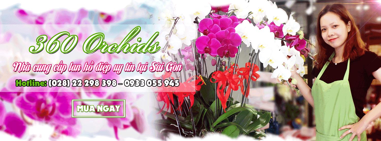 Hoa lan hồ điệp - Hoavily