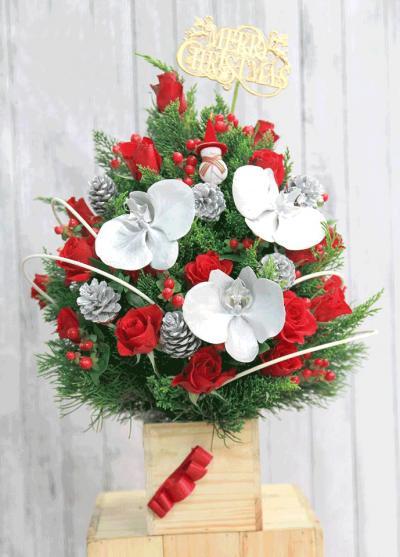 Hoa giáng sinh - Ấm áp giáng sinh
