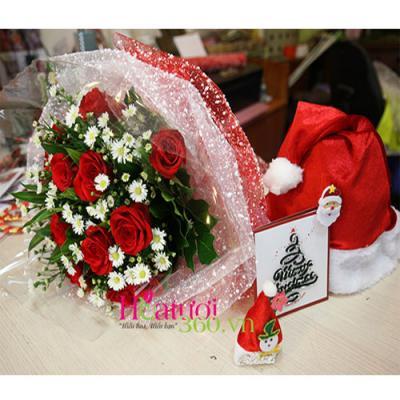 Hoa giáng sinh - Giáng sinh ấm áp