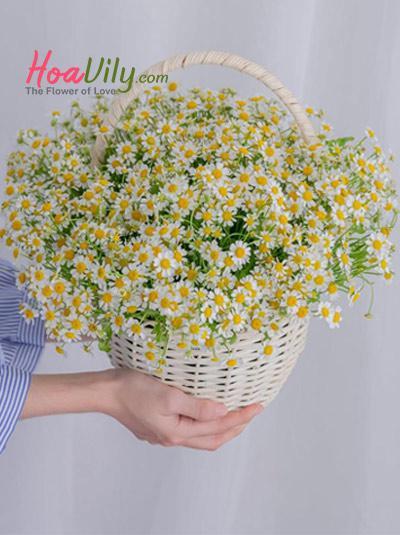 Giỏ hoa cúc tana - Rạng đông