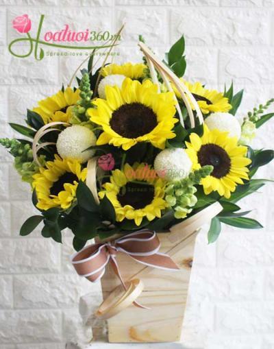 Hoa hướng dương- Màu của nắng