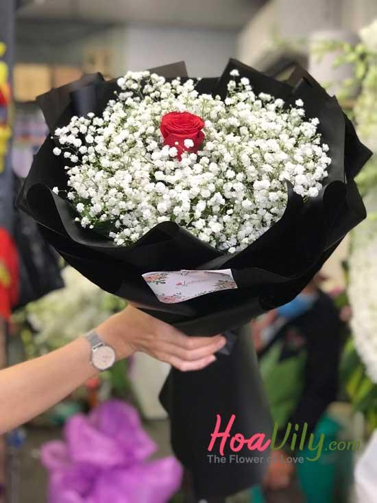 hoa baby giá rẻ