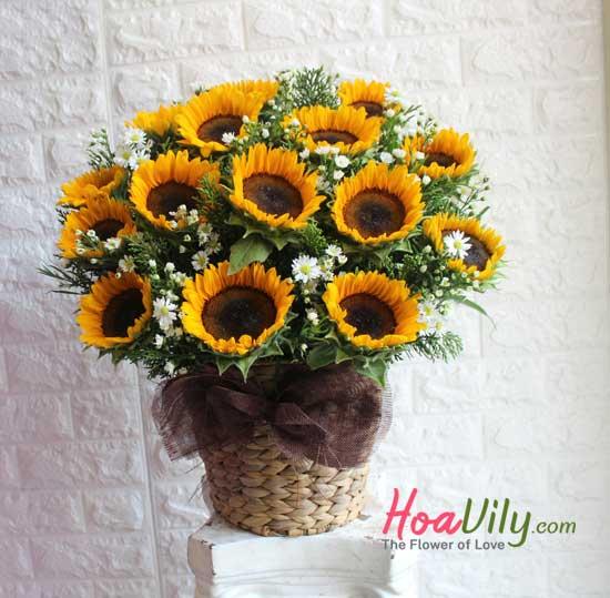 chăm sóc hoa hướng dương tươi lâu