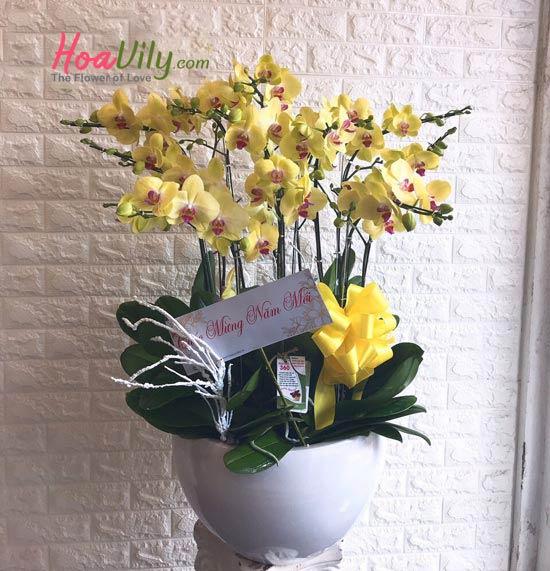Hoa sinh nhật sang trọng từ lan hồ điệp