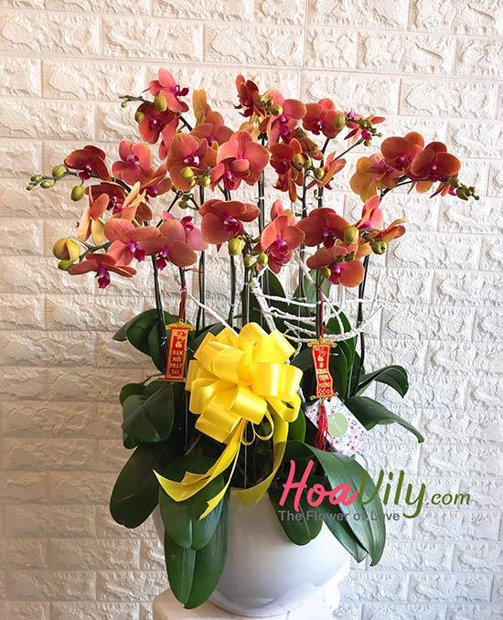 Hoa tặng ngày 27-2