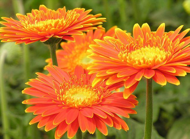Hoa-Va-Banh-Sinh-Nhat-Cho-Đoi-FlowerBi-dep