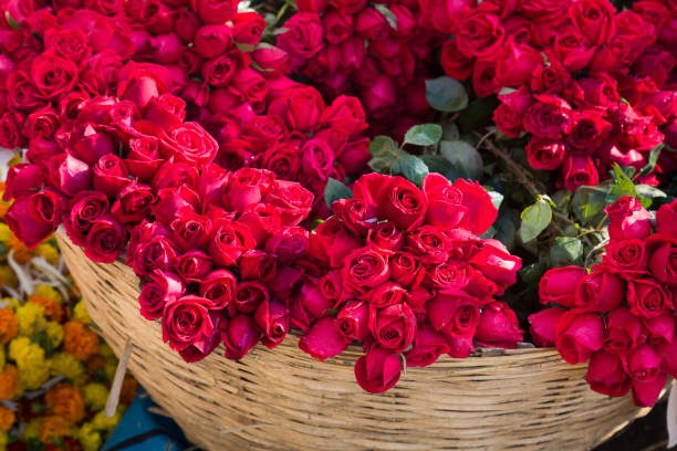 Hoa hồng đẹp lung linh