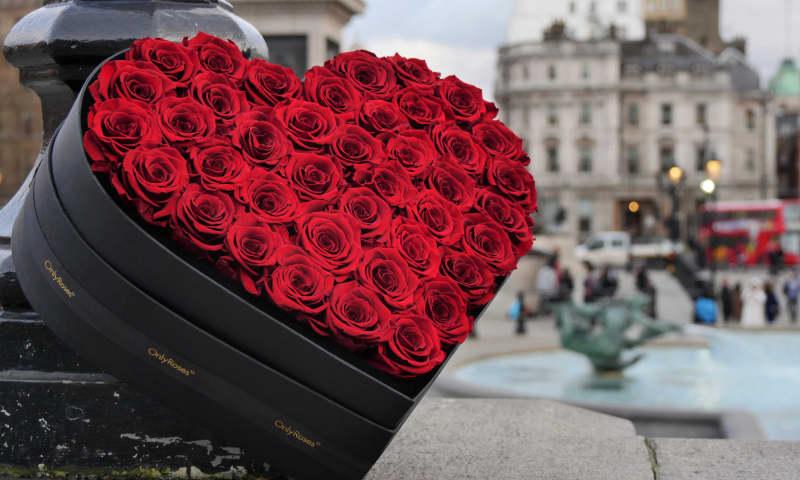 Hoa hồng hình trái tim