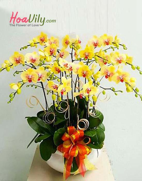 Ấm áp với hoa lan hồ điệp vàng