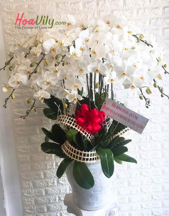 Hồ điệp hoa cao cấp